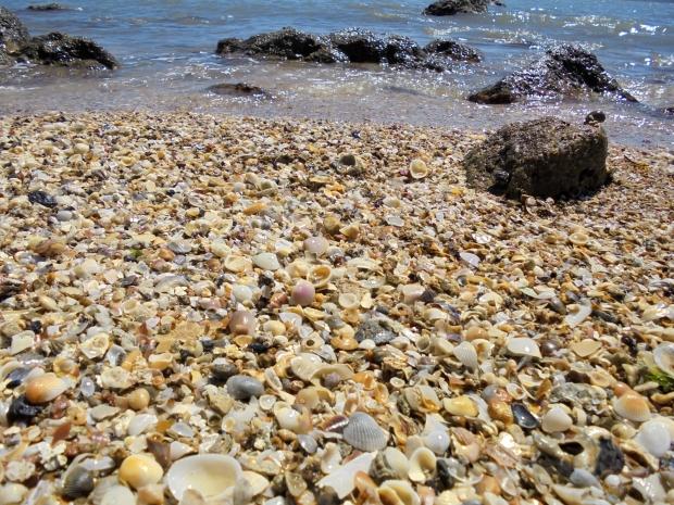 beachshells