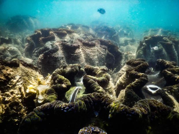 giant-clam-gardens